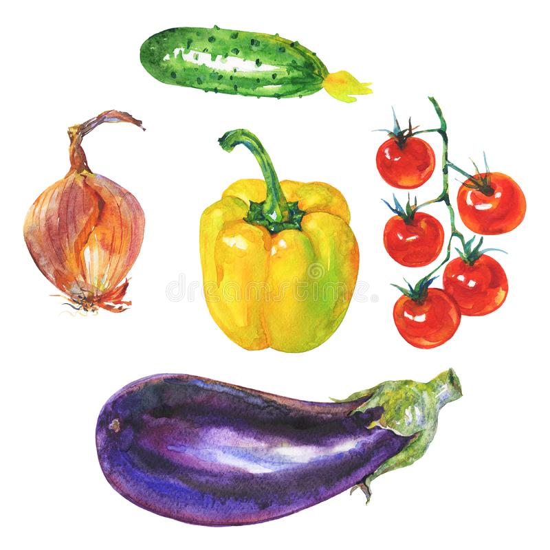 Watercolor yellow paprika pepper, eggplant, onion, cucumber and cherry tomatoes. Watercolor set of fresh vegetables on white background. Hand drawn yellow royalty free illustration