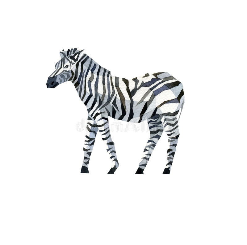 Watercolor zebra. Watercolor abstract zebra black white profile royalty free stock images