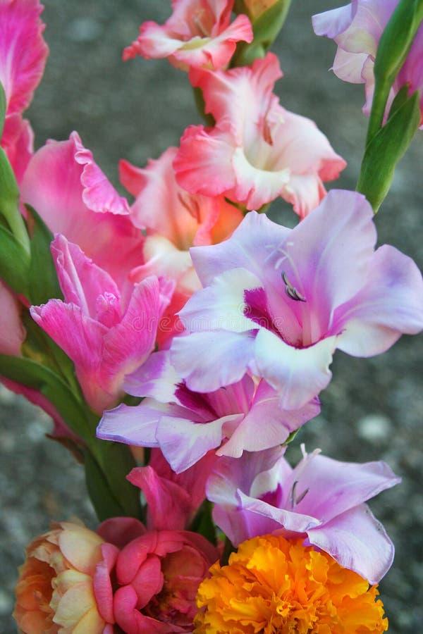 Watercolored剑兰花束 库存照片