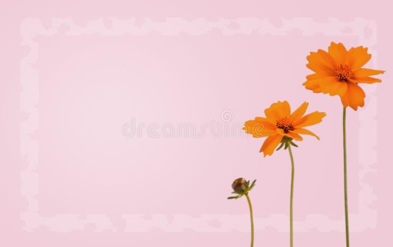 Watercolored oranje bloemen op violette of groene achtergrond royalty-vrije illustratie