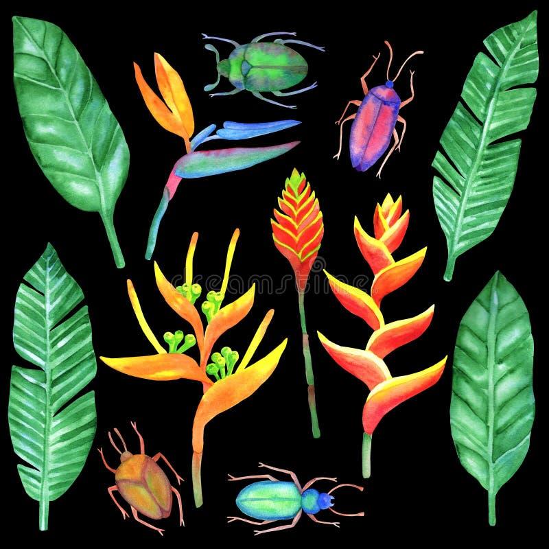 Download Watercolour που τίθεται με τα τροπικά στοιχεία Απεικόνιση αποθεμάτων - εικονογραφία από textile, διακοπές: 62714374