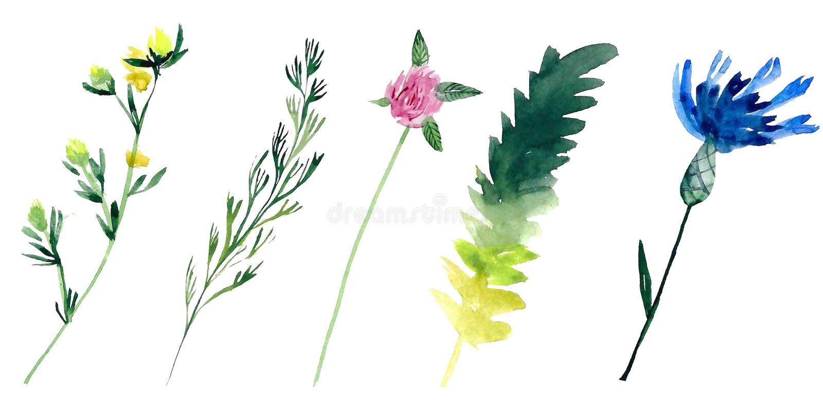 Watercolour field plants royalty free illustration