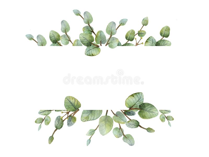 Watercolour green eucalyptus banner on white background. royalty free stock images
