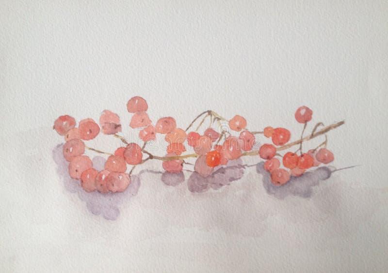 Watercolour ilustracja czerwone jagody royalty ilustracja