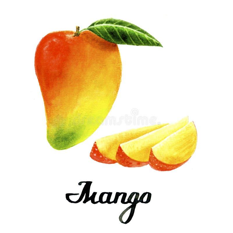 Watercolour mango poster. Watercolour mango for poster, cards, branding, decor stock image