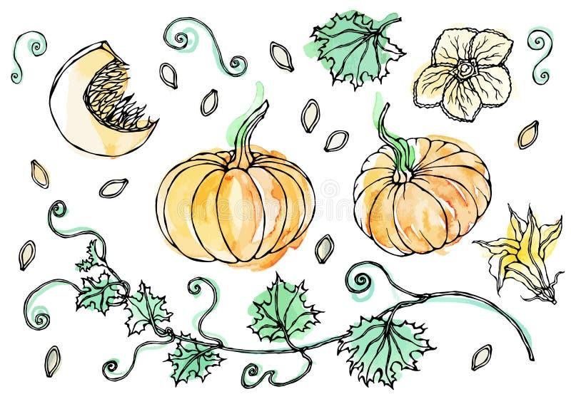 Watercolour Plantaardige Pompoen Installatie met Bladeren, Bloem en Zaden Realistische hand getrokken illustratie Savoyarkrabbel royalty-vrije illustratie