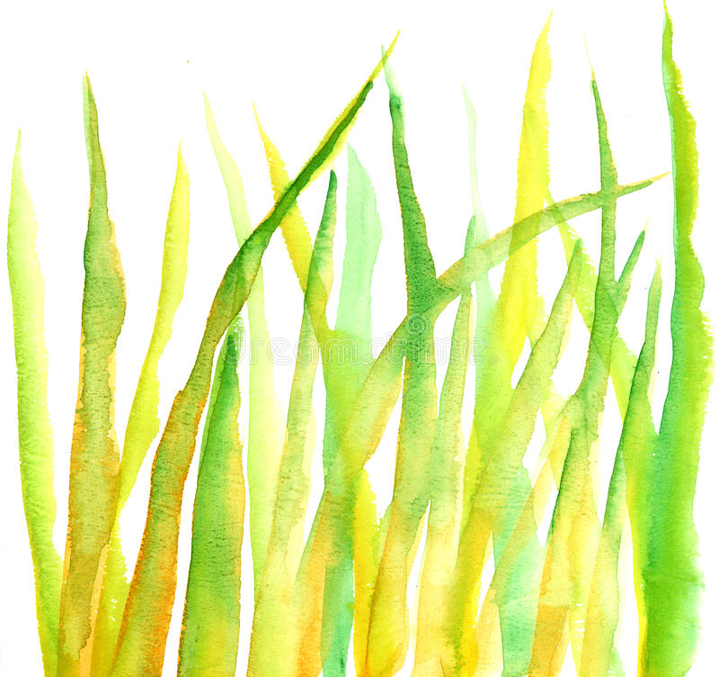 Watercolourgras stock abbildung