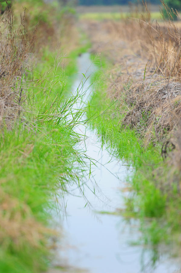 Watercourse av jordbruk royaltyfria foton