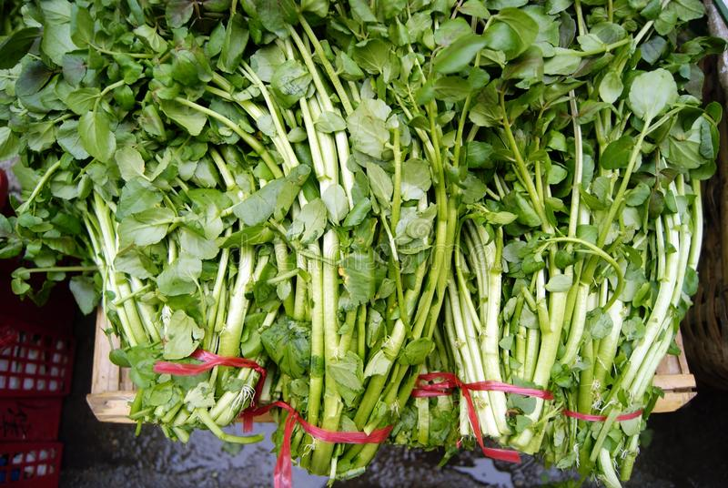 watercress zdjęcia stock