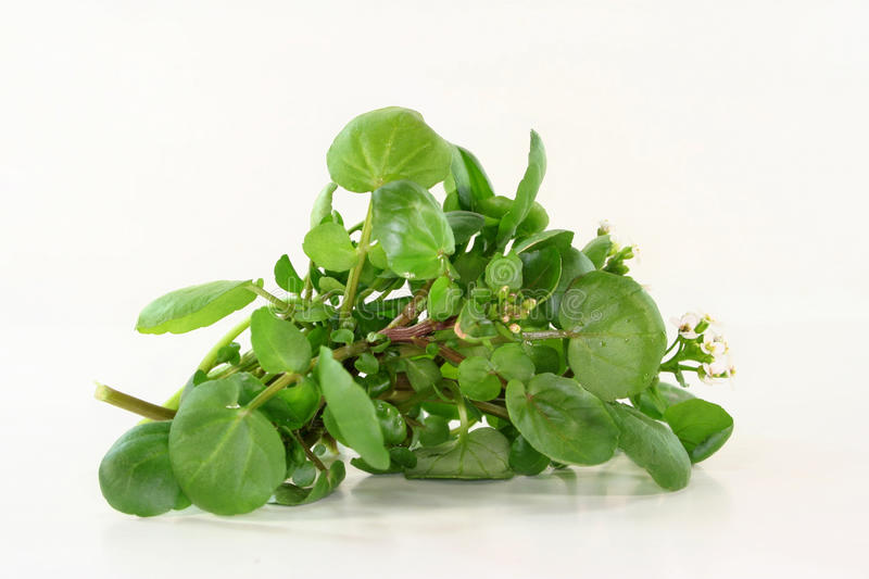 Watercress. A bunch of watercress on white background royalty free stock images