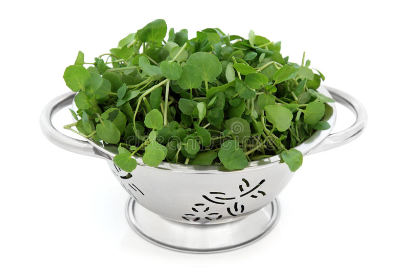 Download Watercress stock image. Image of green, fresh, food, vegetable - 24735539
