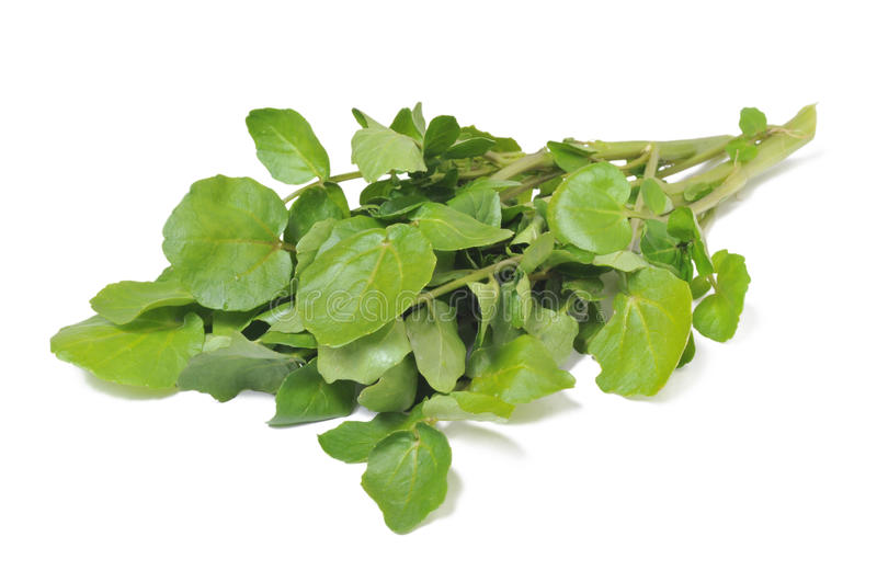 Watercress royalty free stock images