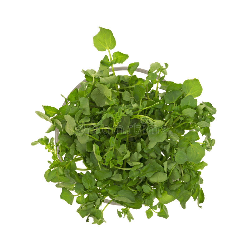 Watercress bunch. Top view of watercress in a glass container stock images