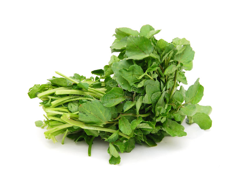 A watercress bunch. On white background stock photo
