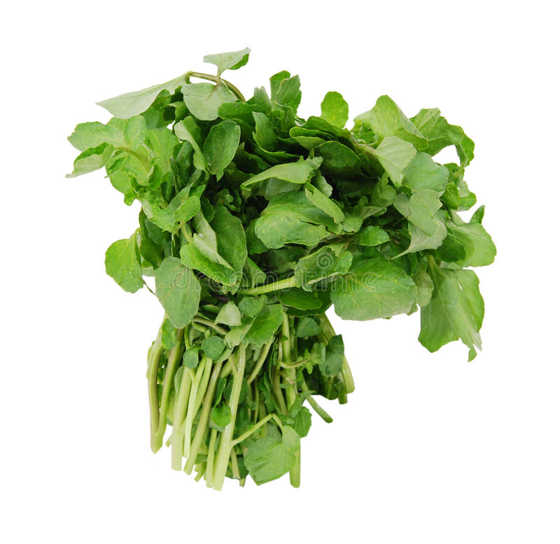 A watercress bunch. On white stock image