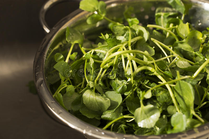 Watercress. In colander after rinsing stock photography
