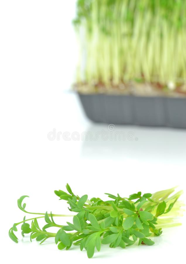 Watercress Cuttings Royalty Free Stock Images