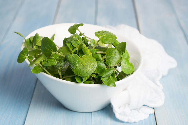 Watercress. Fresh watercress in a jug with white muslin cloth stock photo