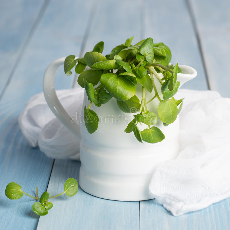 Watercress. Fresh watercress in a jug with white muslin cloth royalty free stock photography