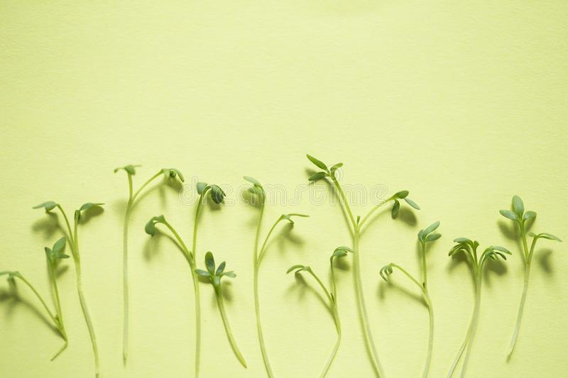 Watercress. Sprouts pattern on green background stock images