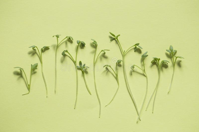 Watercress. Sprouts pattern on green background royalty free stock images