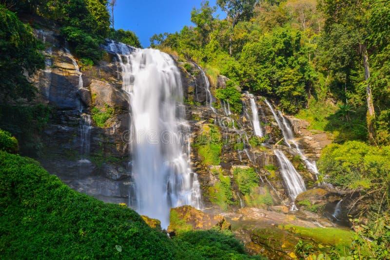 Waterdaling in diepe regenwoudwildernis die wordt gevestigd stock afbeelding