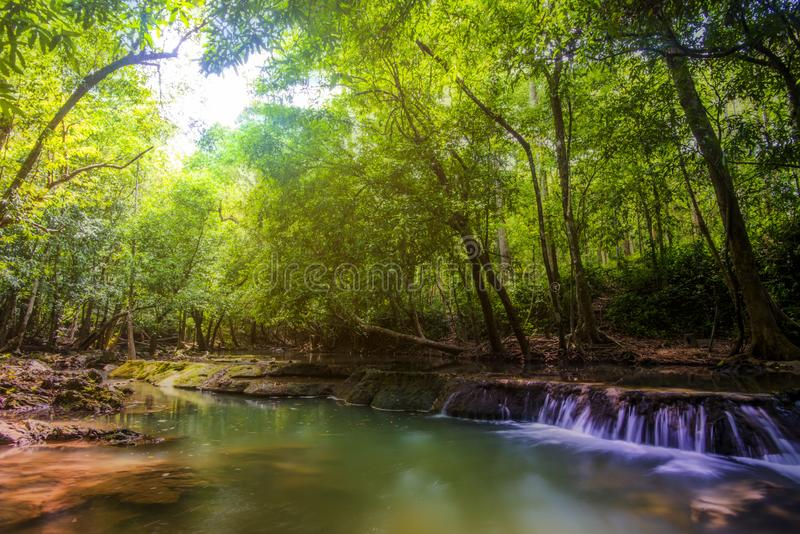 Waterdaling en bomen stock fotografie