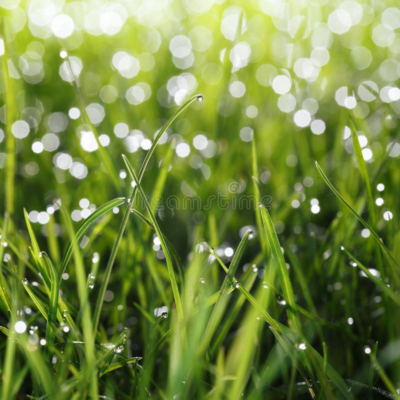 Waterdaling op de bovenkant van het grasblad royalty-vrije stock afbeelding
