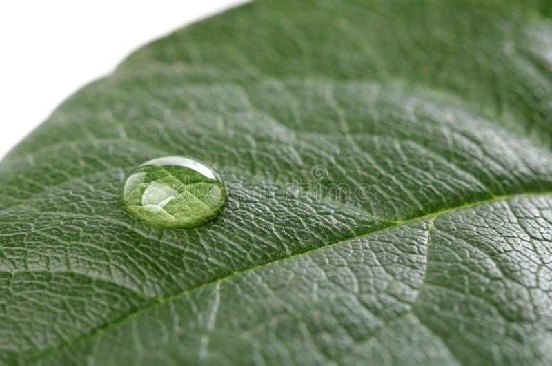 Waterdaling op groen blad over wit royalty-vrije stock foto