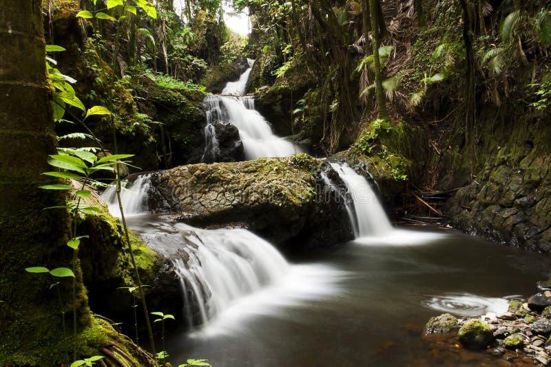 Waterdaling van de Tropische Botanische Tuin van Hawaï stock foto's