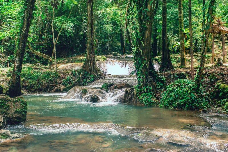 Waterdaling van groen bos met heel wat boom royalty-vrije stock afbeelding