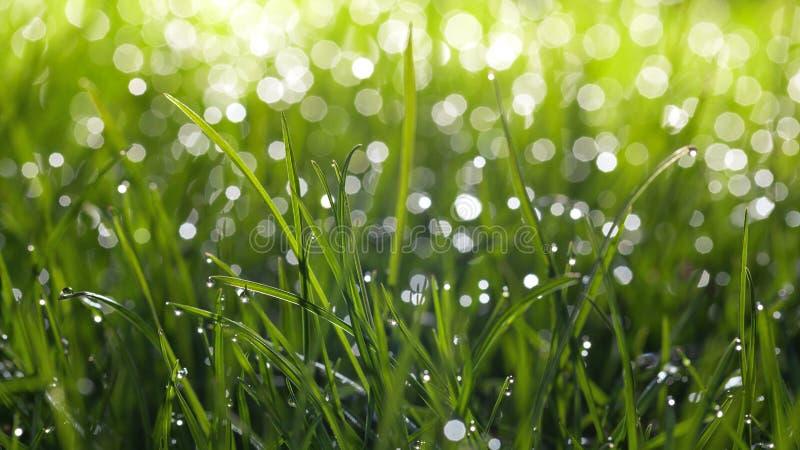 Waterdalingen en bokeh op gras royalty-vrije stock afbeeldingen