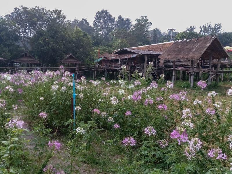 Waterdalingen op bloemen stock fotografie