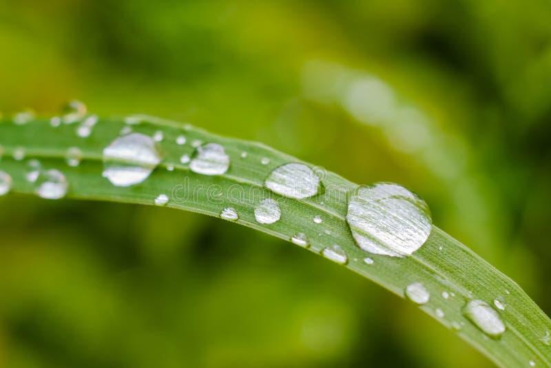 Waterdalingen op een blad stock foto