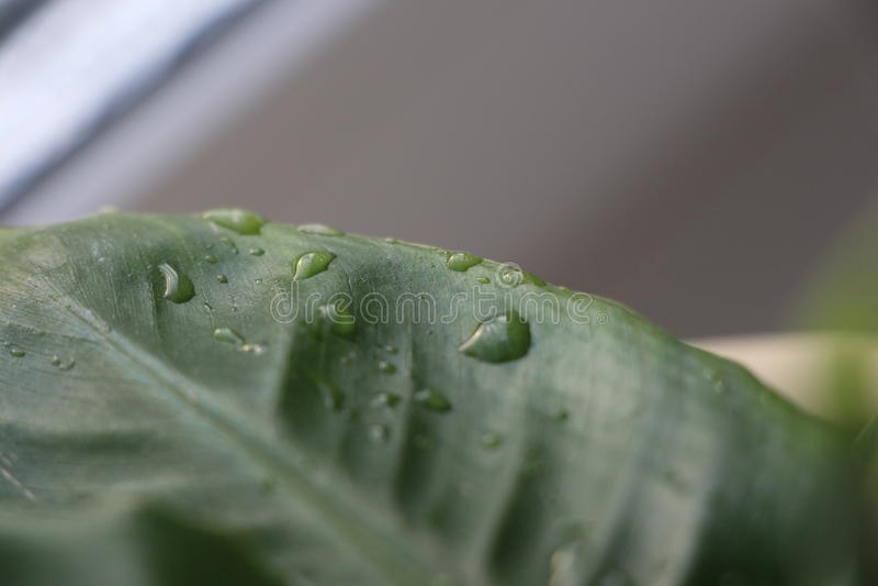 Waterdalingen op groene bladinstallaties stock foto