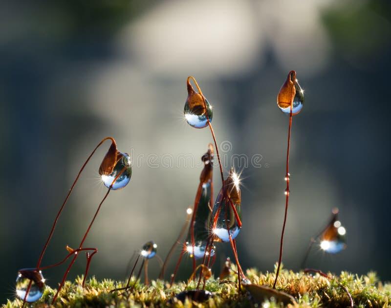 Waterdalingen op stammen van Mos royalty-vrije stock afbeelding