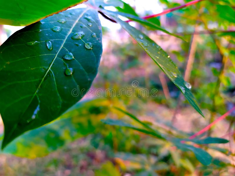 Waterdrop на листьях в утре стоковое фото