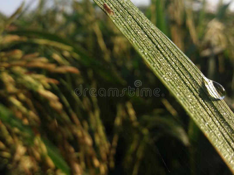 waterdrop στοκ φωτογραφίες με δικαίωμα ελεύθερης χρήσης