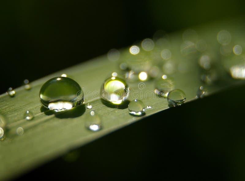 Waterdrop lizenzfreie stockfotografie