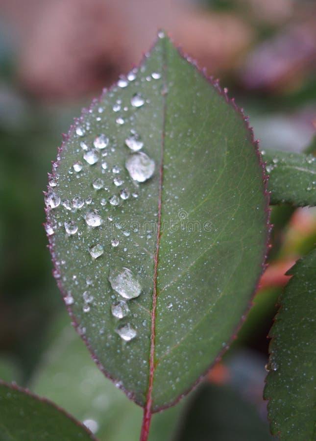 Download Waterdrop fotografering för bildbyråer. Bild av trädgård - 76703373