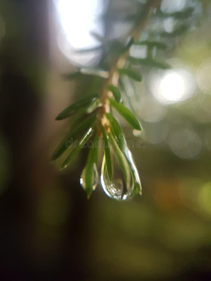 Waterdrop dall'albero fotografia stock