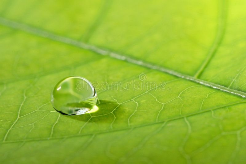 Waterdrop on a leaf. Waterdrop on a green leaf royalty free stock photo