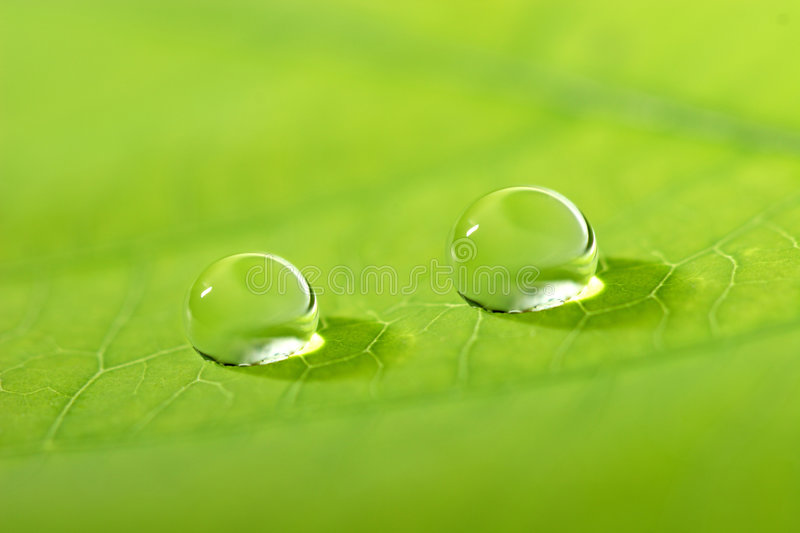 Waterdrop on a leaf royalty free stock photos