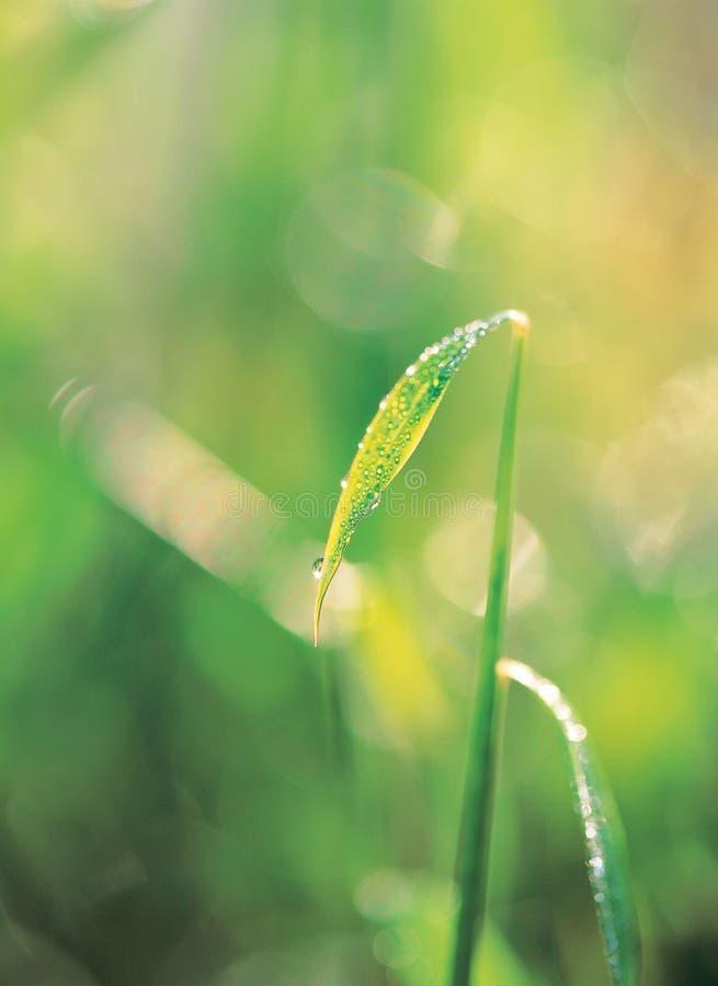 Download Waterdrop on leaf stock image. Image of shine, waterdrops - 943455