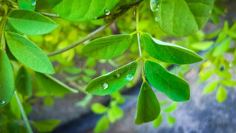 Waterdrop on Leaf. Clear, , , nature, leaf, waterdrop, green stock photos