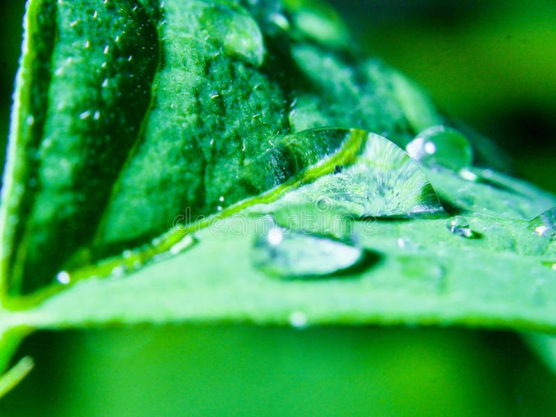 Waterdrop. On a leaves royalty free stock photography