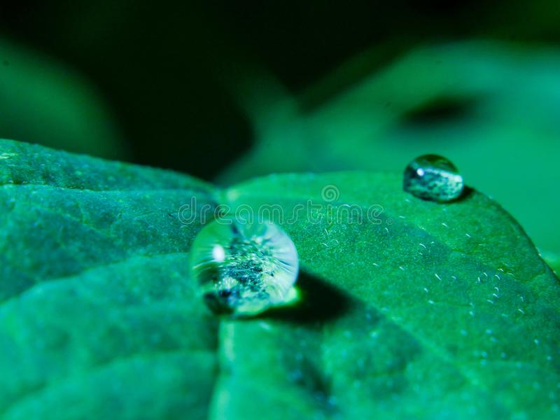Waterdrop. On a leaves royalty free stock image