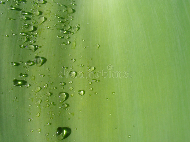 waterdrop liści zdjęcie royalty free
