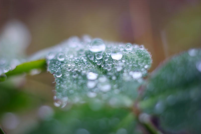 Waterdrop macro foto de stock