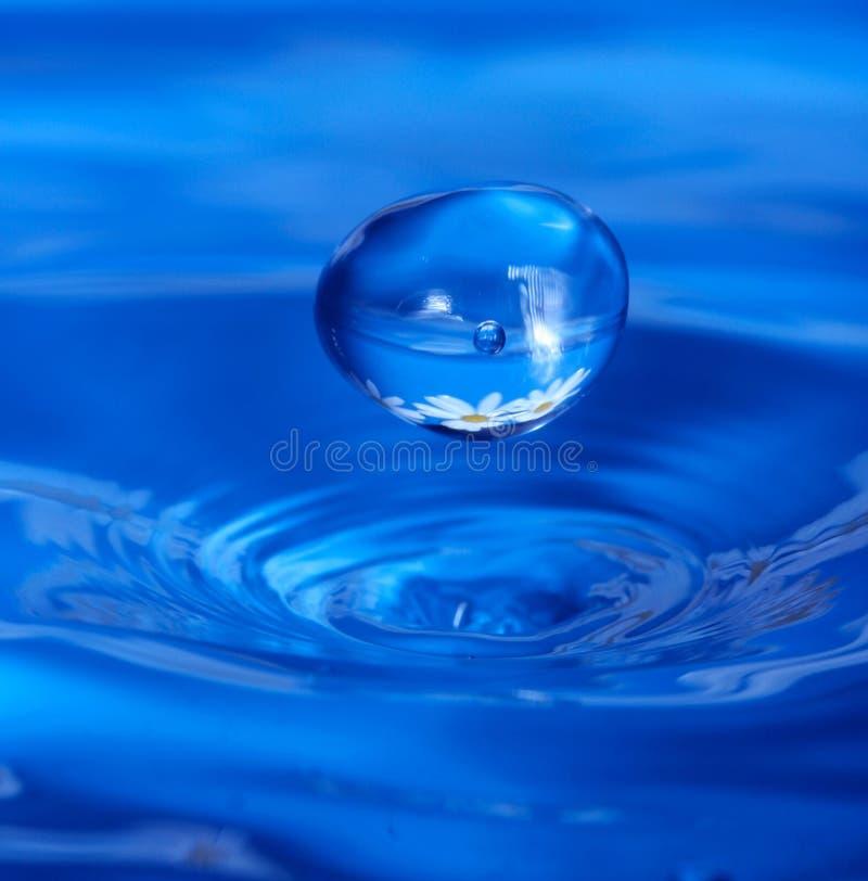 Waterdrop met bloembezinning stock fotografie